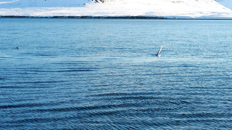 A plastik ocean - 10 Fakten über plastik
