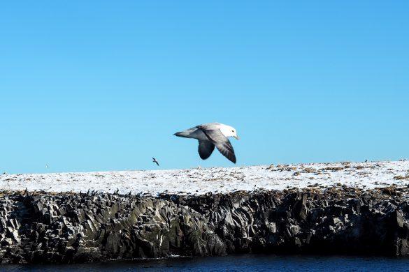 Responsible whale watching in Island - Alternative zu Seaworld, Laki Tours