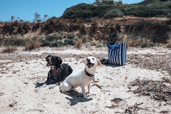 Urlaub mit Hund - eine Checkliste
