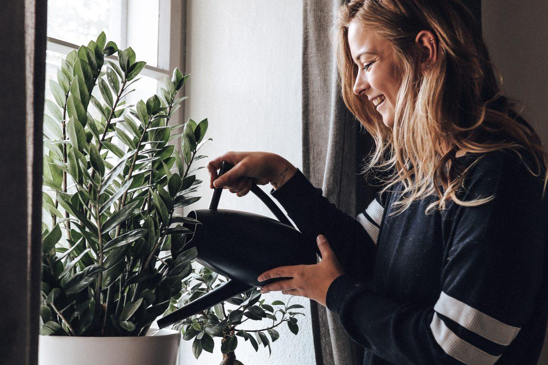 Mein Dschungel - Grüne Zimmerpflanzen Liebe