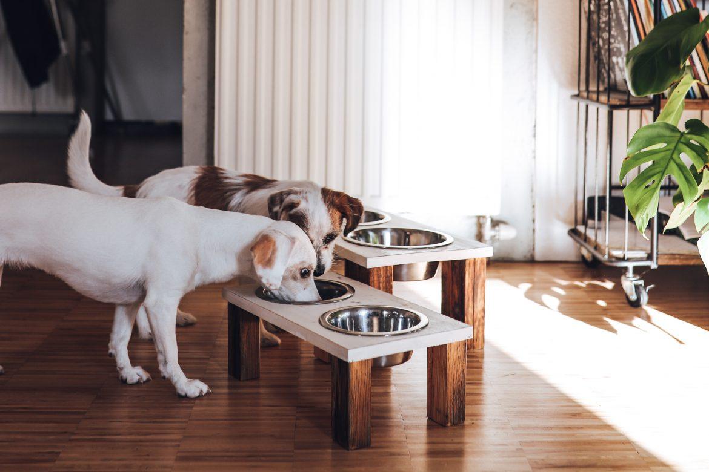 DIY Futterschüssel für Haustiere